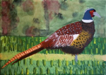"pheasant acrylic on canvas  2015 • <a style=""font-size:0.8em;"" href=""http://www.flickr.com/photos/41385418@N07/25096603801/"" target=""_blank"">View on Flickr</a>"